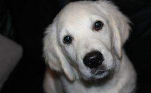 犬の画像のalt属性の例