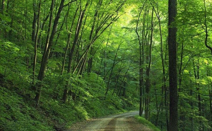 自然に多く見られる緑
